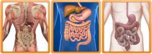 Detox Weight Loss Supplements 2